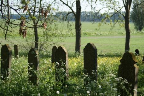 Voorjaar in Wittewierum, foto Albert-Erik de Winter